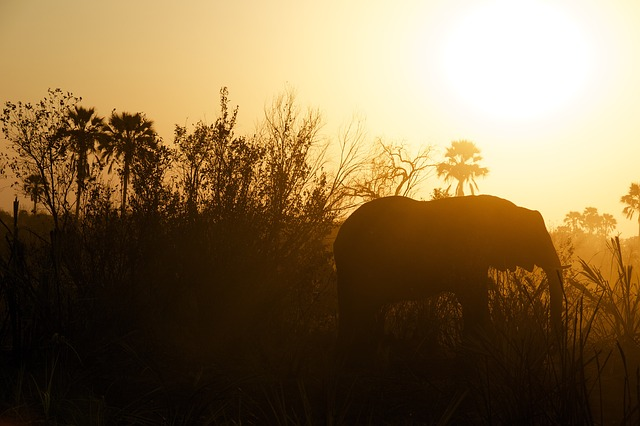 elephant-828991_640
