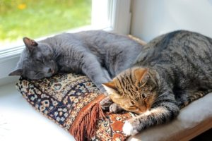 cats-1577580_640