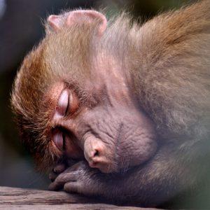 monkey-391372_640