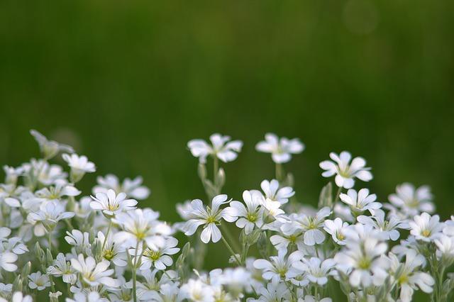 flowers-1413068_640